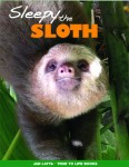 Sleepy the Sloth