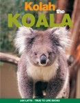 Kolah the Koala
