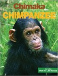 Chimaka the Chimpanzee